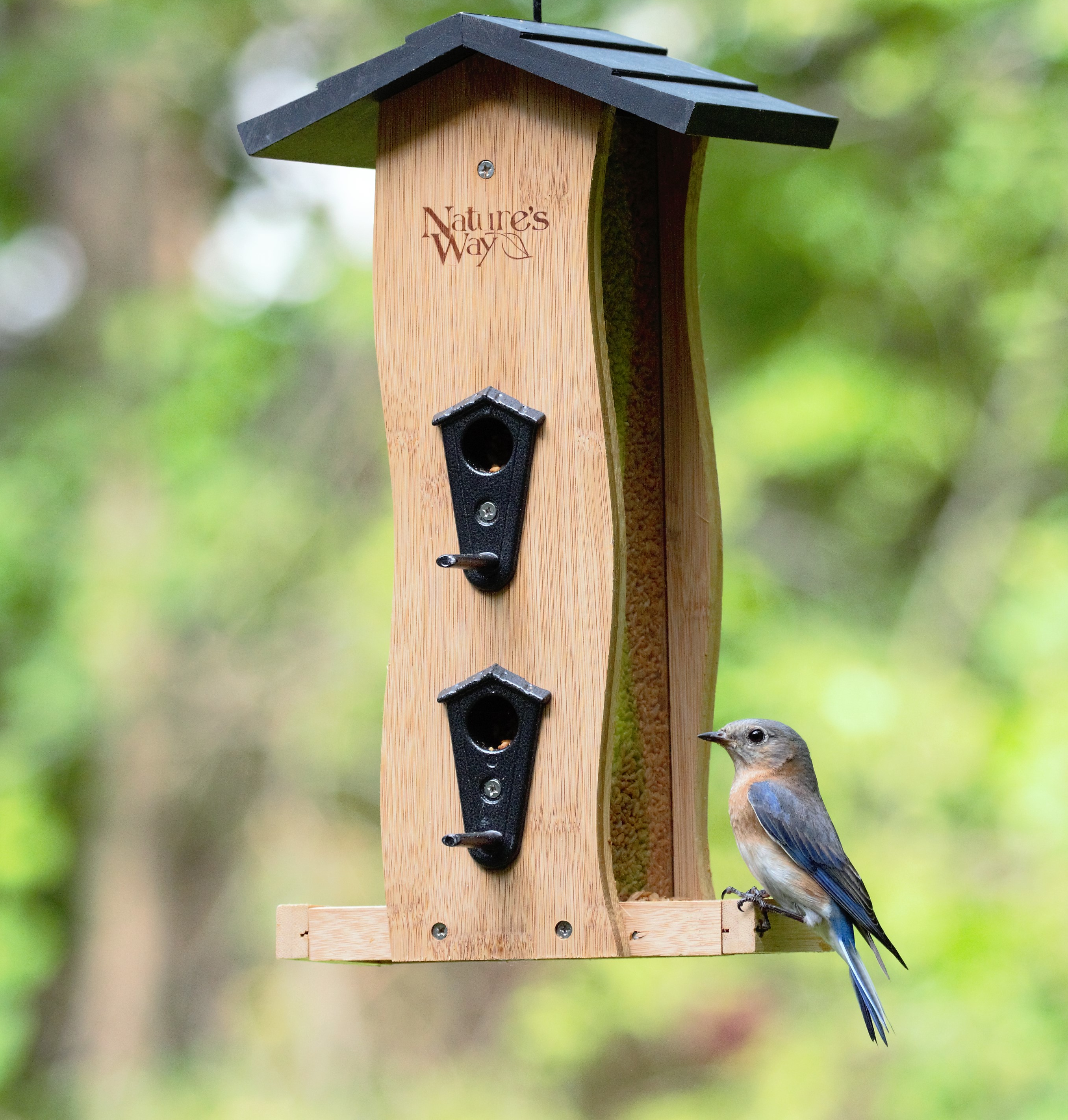 nature's way, bamboo feeder, bluebird, hot meats, pepper nuggets