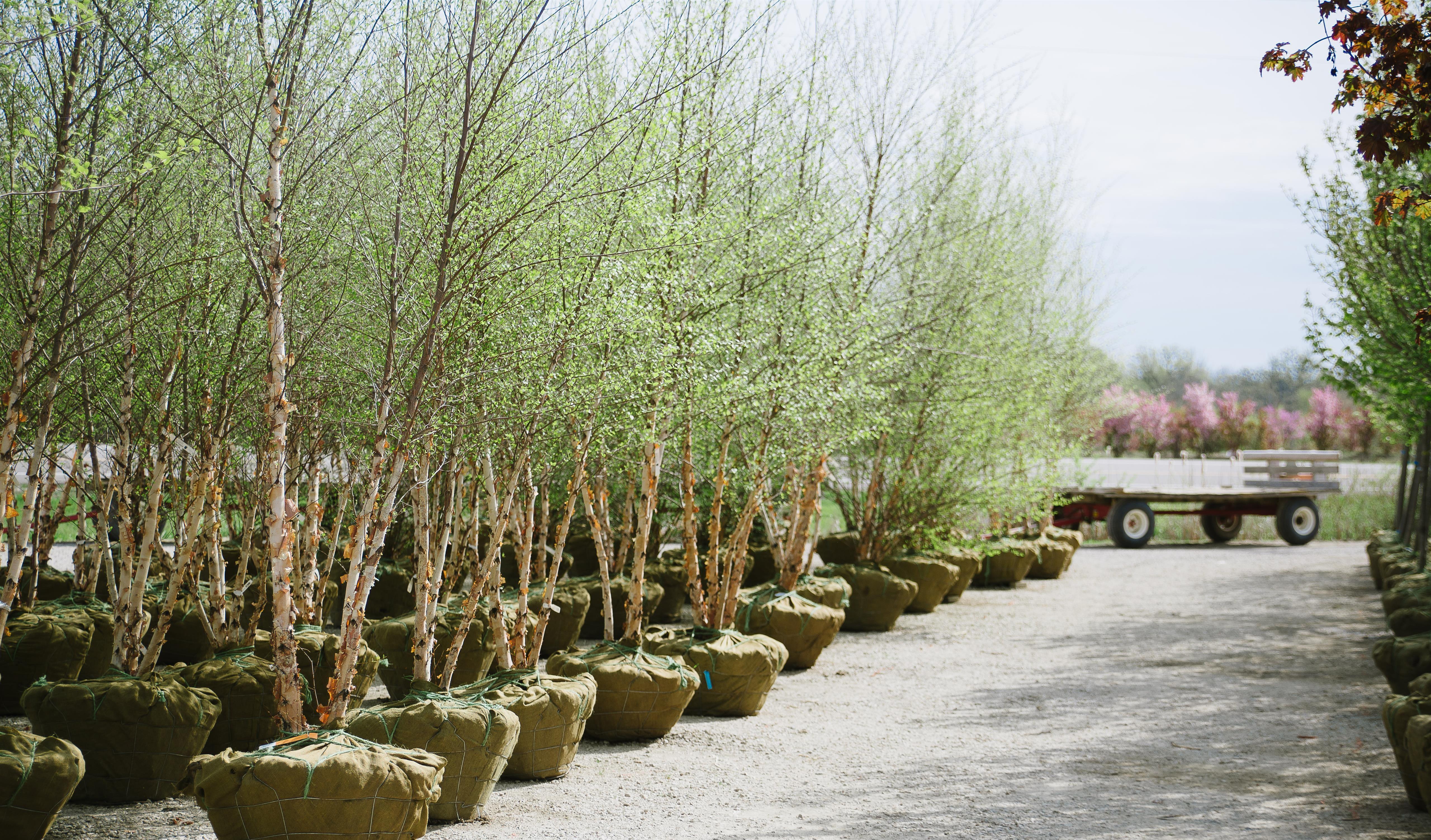 Miniture_Fairy_Garden_Gypsy_Garden