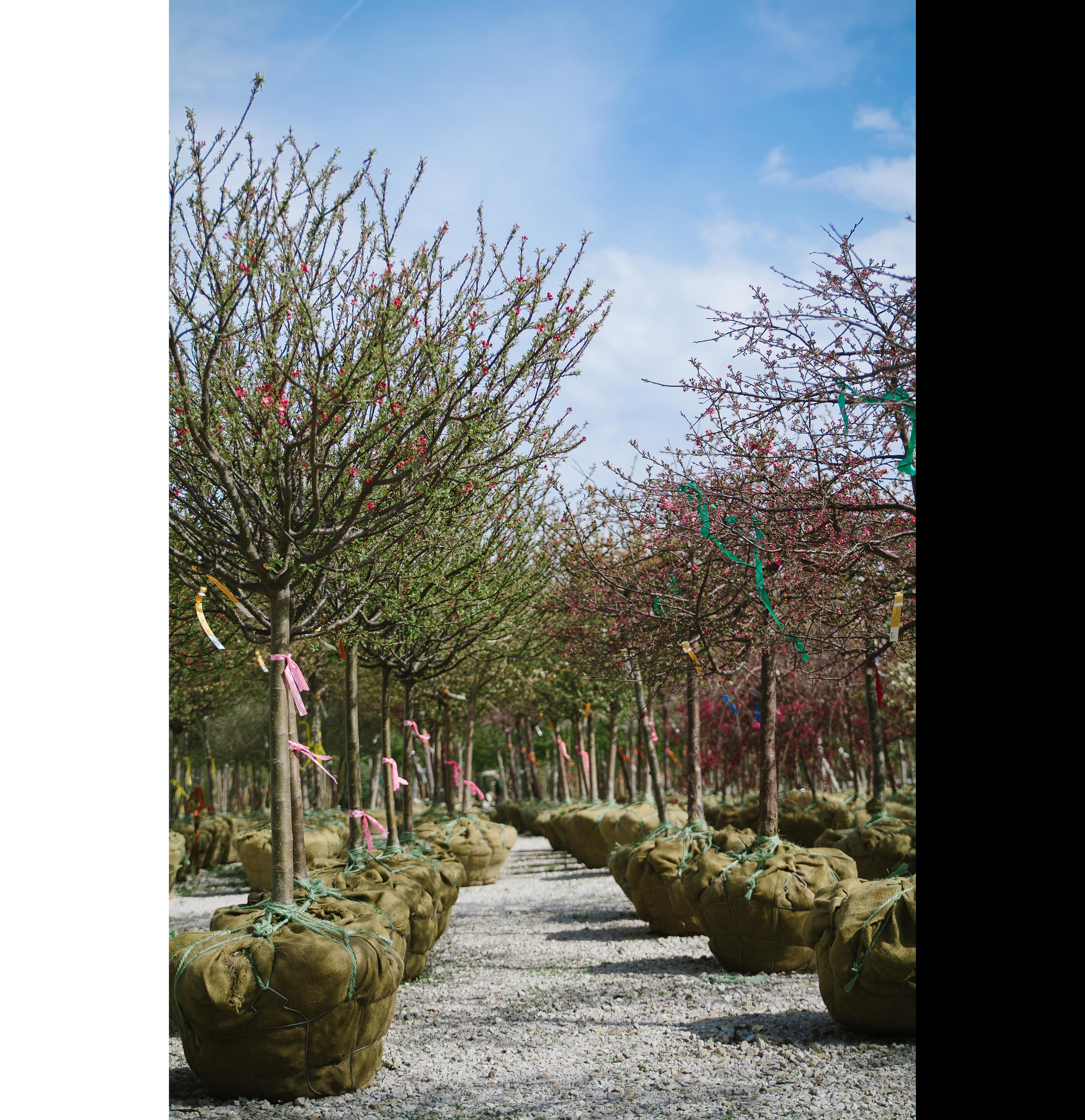 Miniture_Fairy_Garden_Wagon
