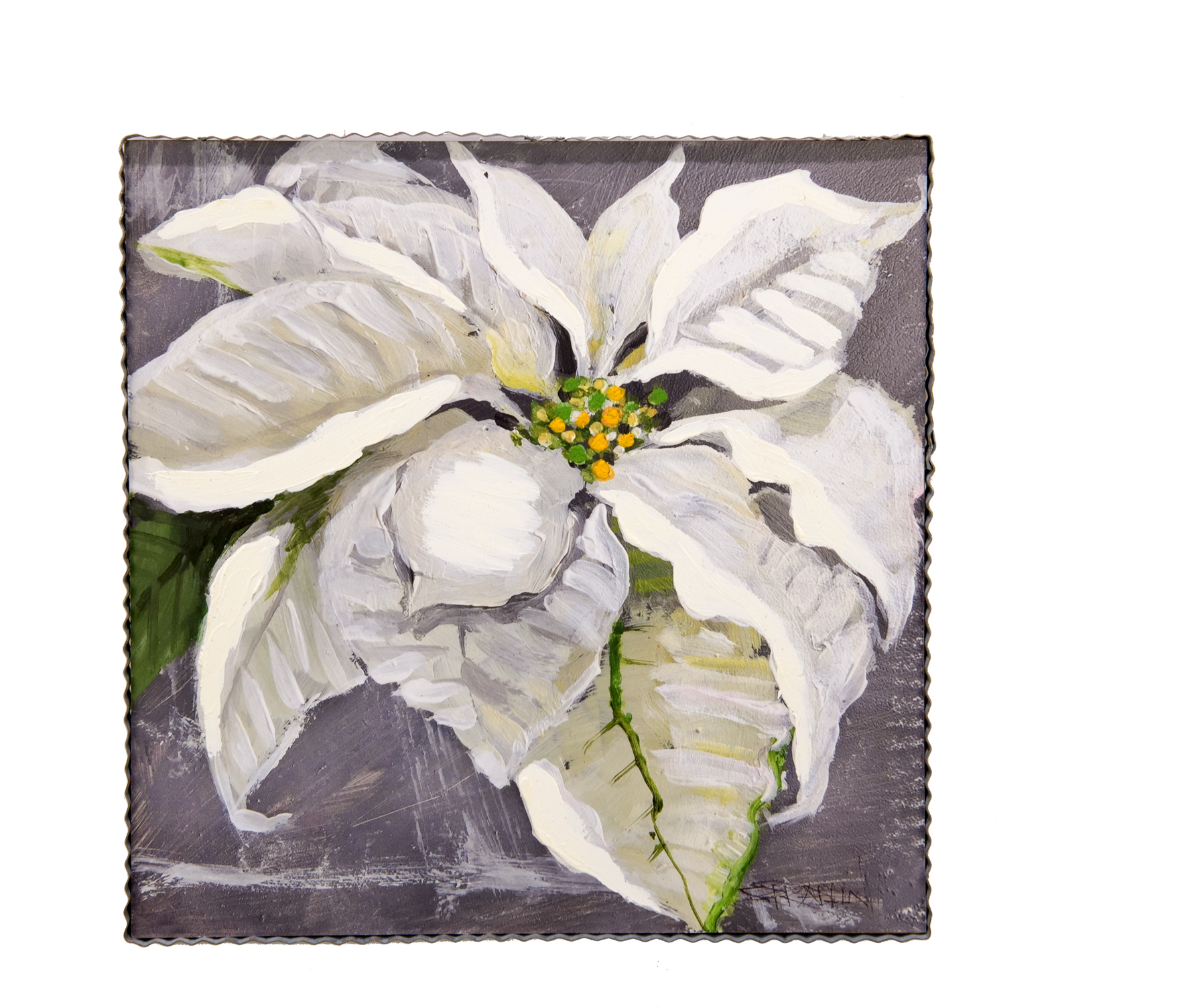 White Poinsettia Large