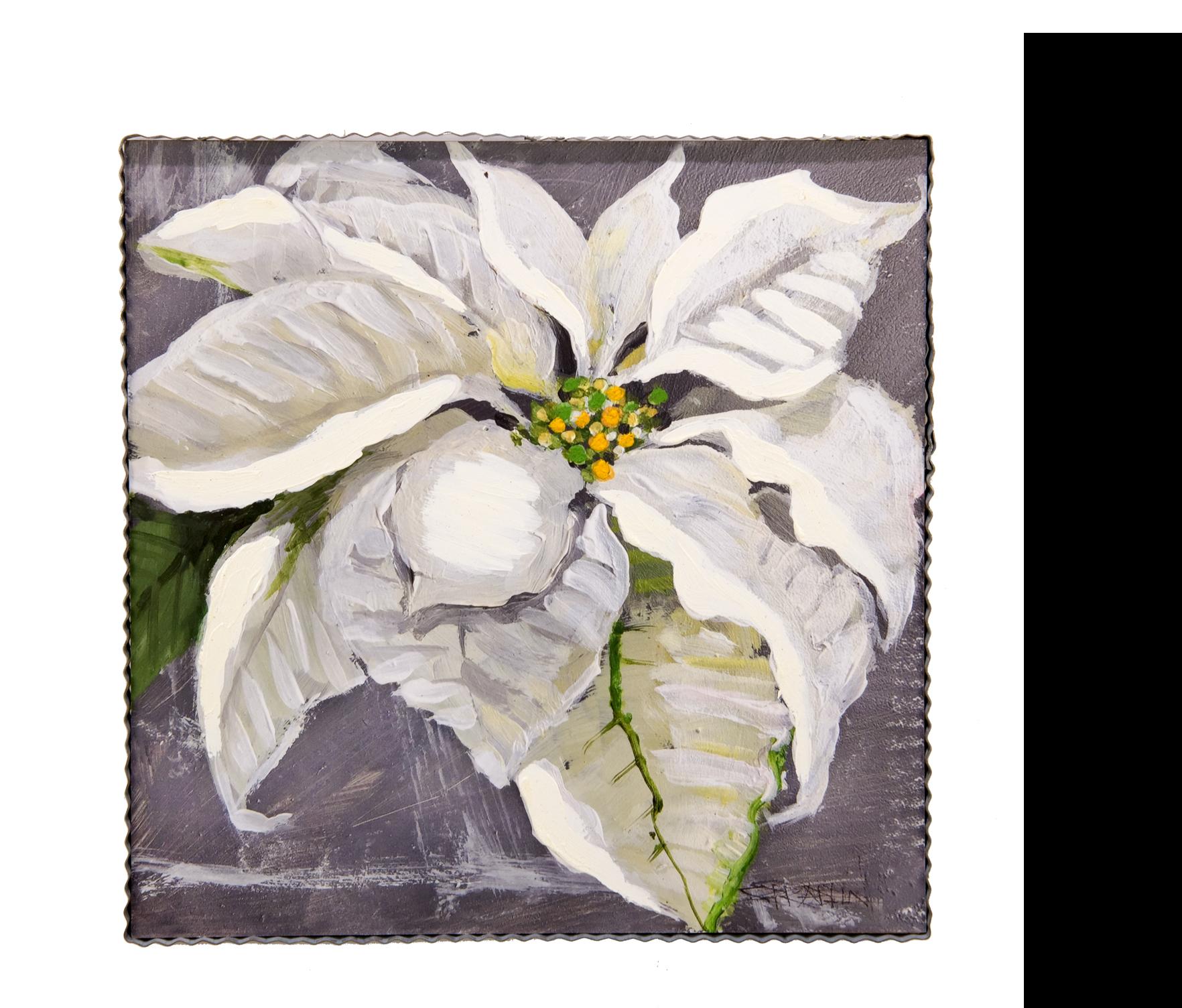 White Poinsettia Large