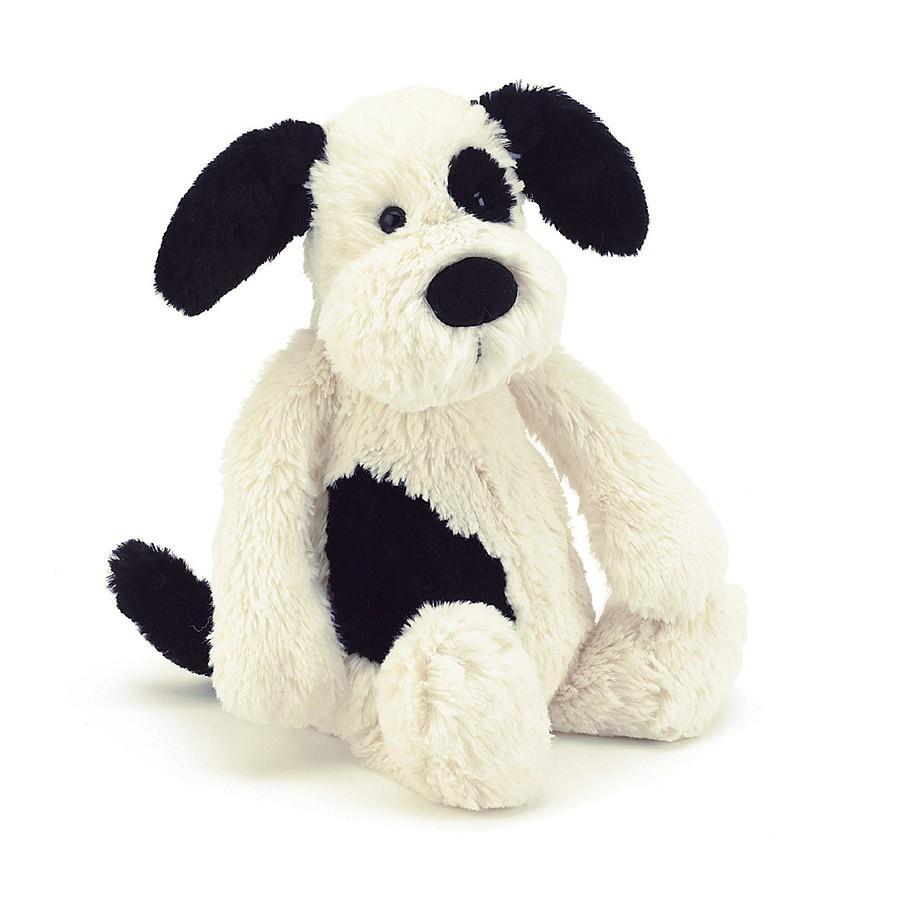 Bashful Black & White Puppy