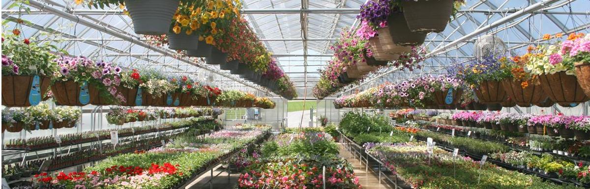 Greenhouse_ in _full_season