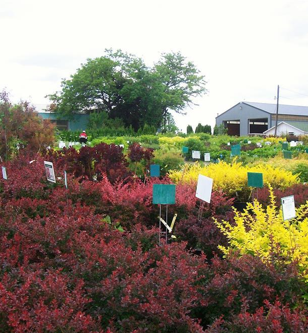 Shrubs_Plants_Nursery