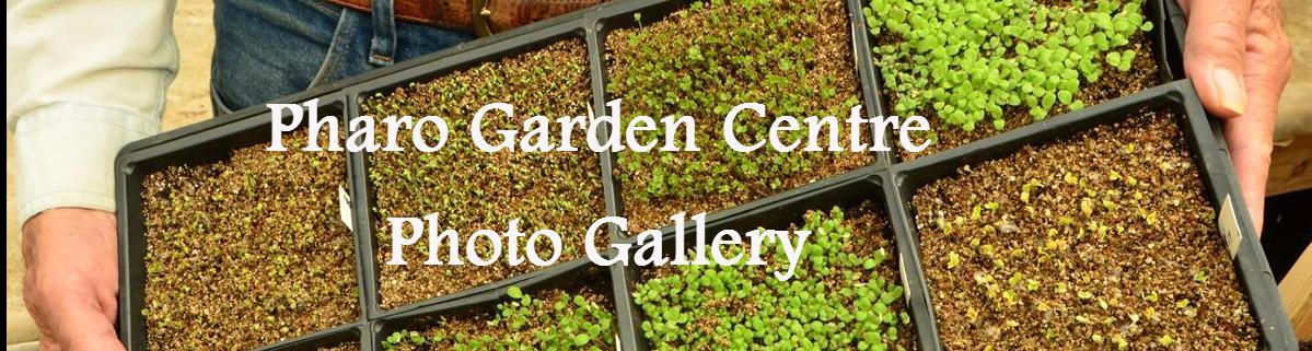Pharo Garden Centre photo gallery
