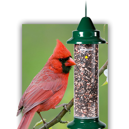 Bird seed, bird feed, and bird feeders large capacity, squirrel proof