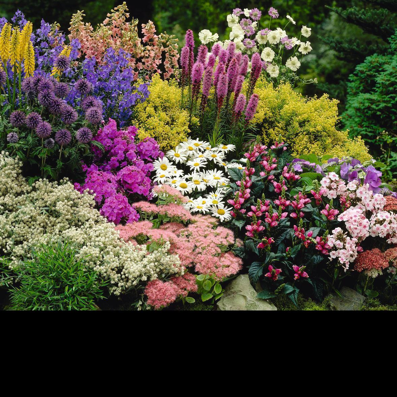 perennials Pharo Garden Centre