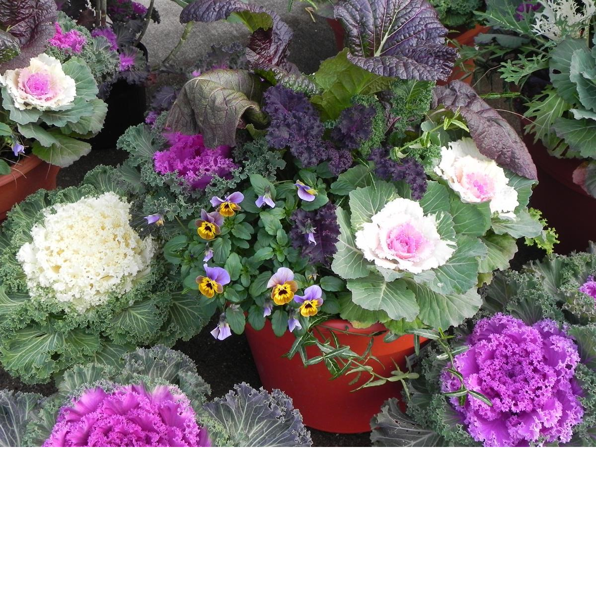 potted plants Pharo Garden Centre Bethlehem pa
