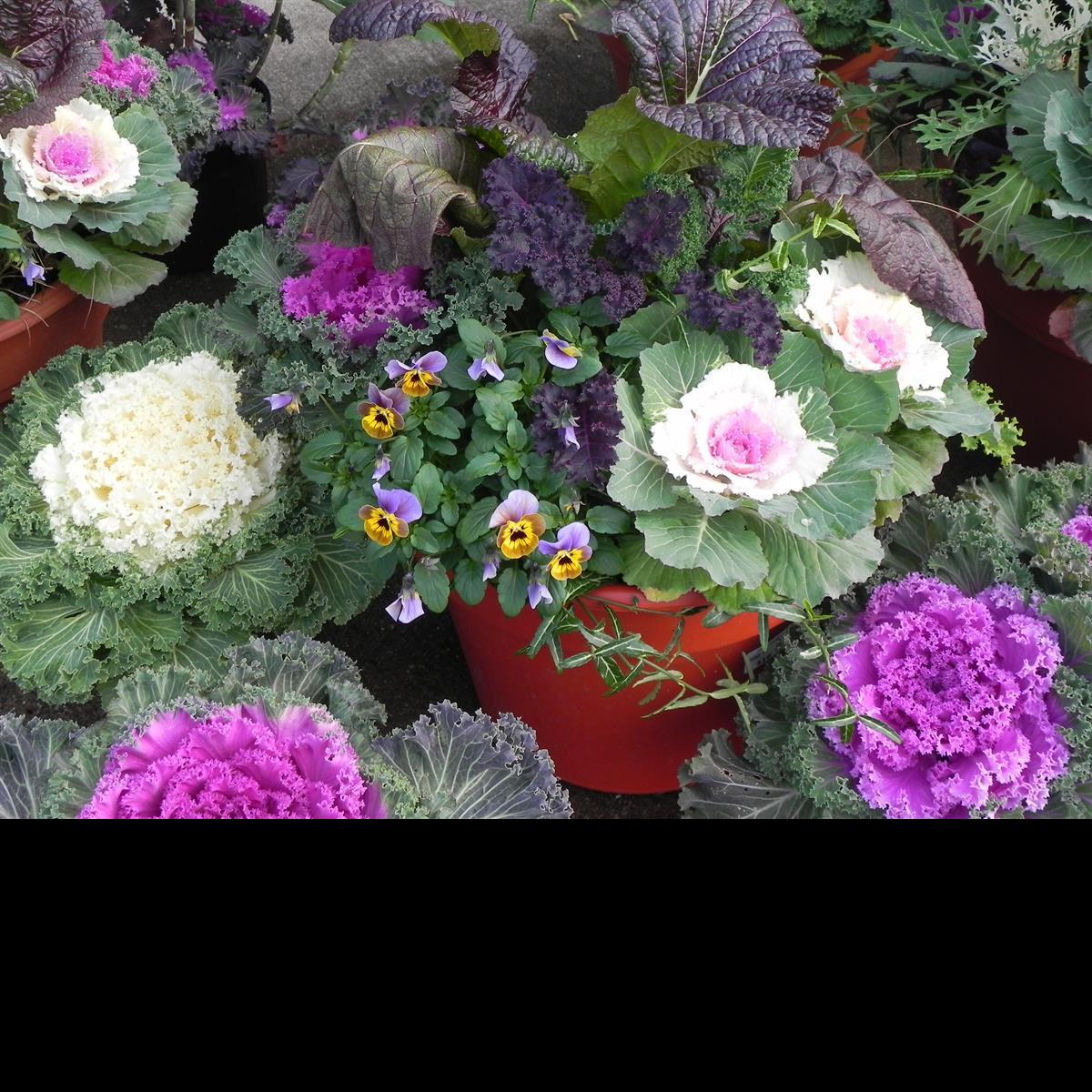 potted plants Pharo Garden Centre Bethlehem pa