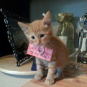 Cute Proposal Ideas