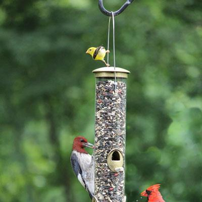 Cole's seed, bird feed, and bird feeders, Special Feeder, Cole's Wild Bird Products