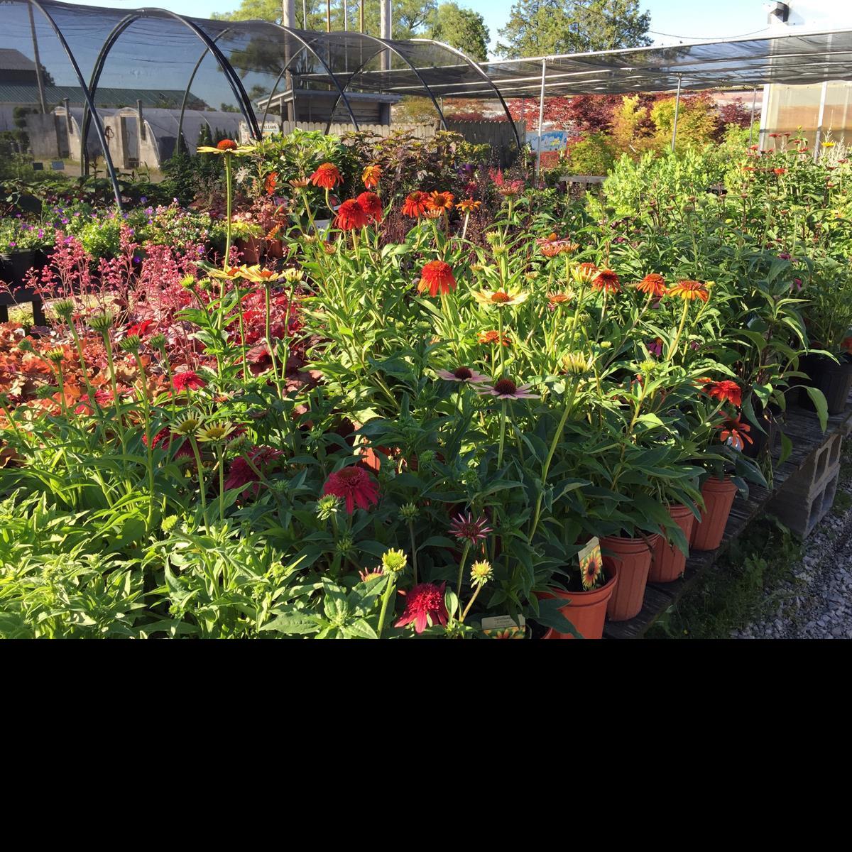 Garden_Center_Perennials_Flowers