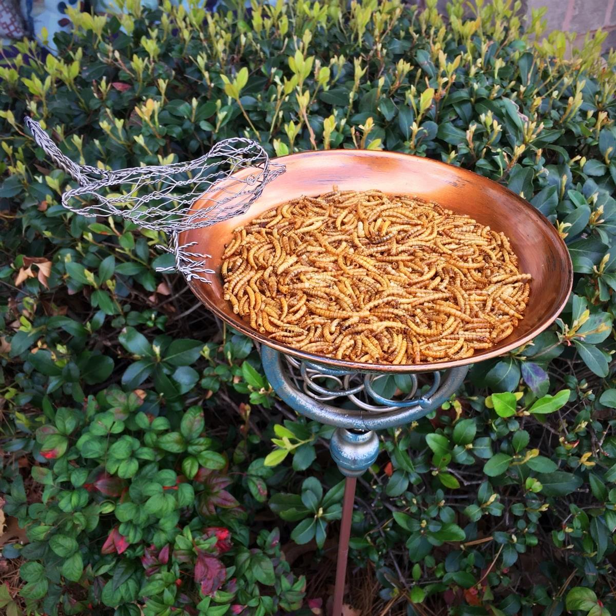 bird seed, bird food, bird feeder, mealworm feeder, metal flower, decorative feeder