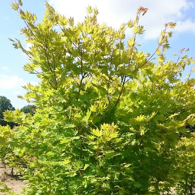 Plant_picture