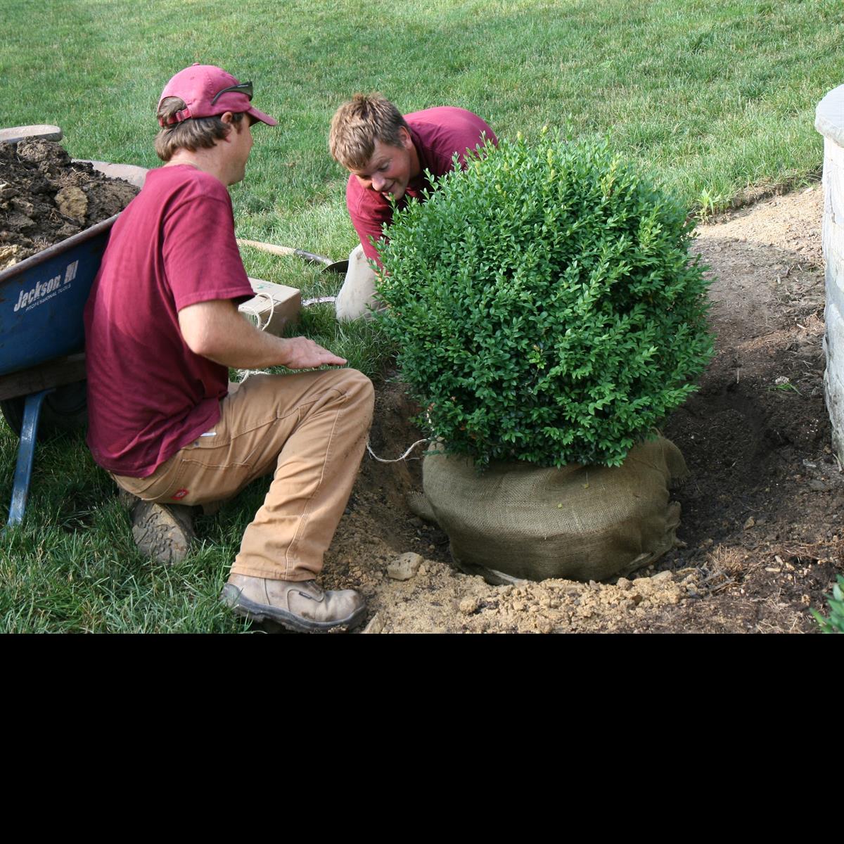 Men_working_on_digging_boxwood