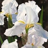 iris flowers, white flowers, white irises, floral artist Brian Davis, limited edition, oil on canvas, flower blooms