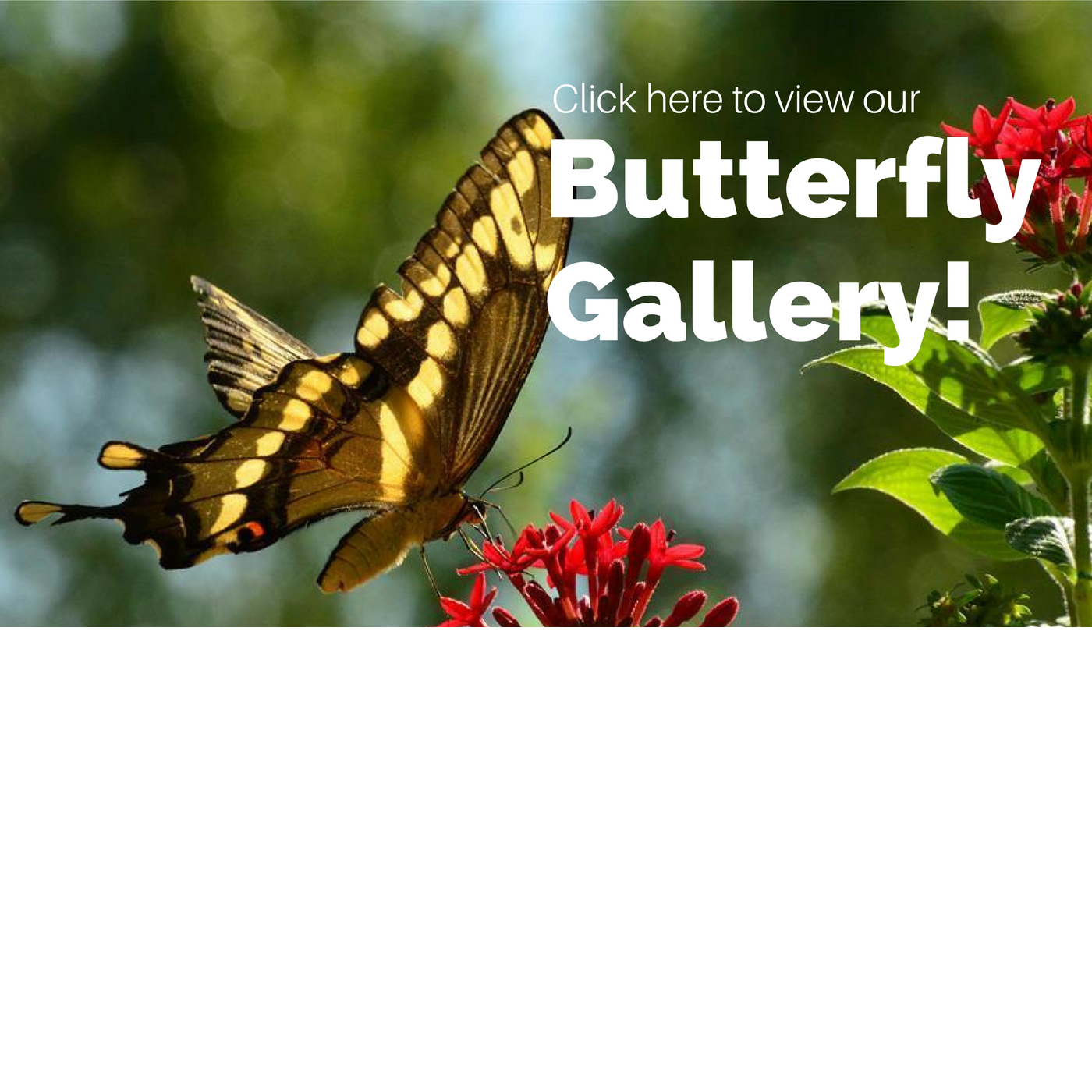 butterfly, butterfly images