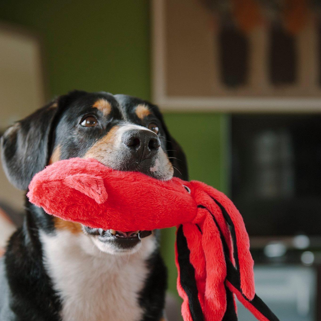 dog_toys