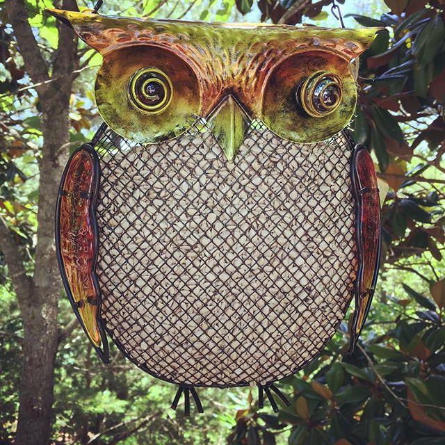 bird feeder, owl, mesh feeder, whimsical, fall